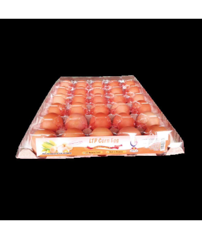 LTP Chicken Egg A 30's