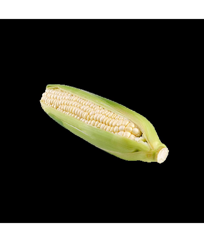 Agro Fresh Sugar Cane Sweet Corn 1pc
