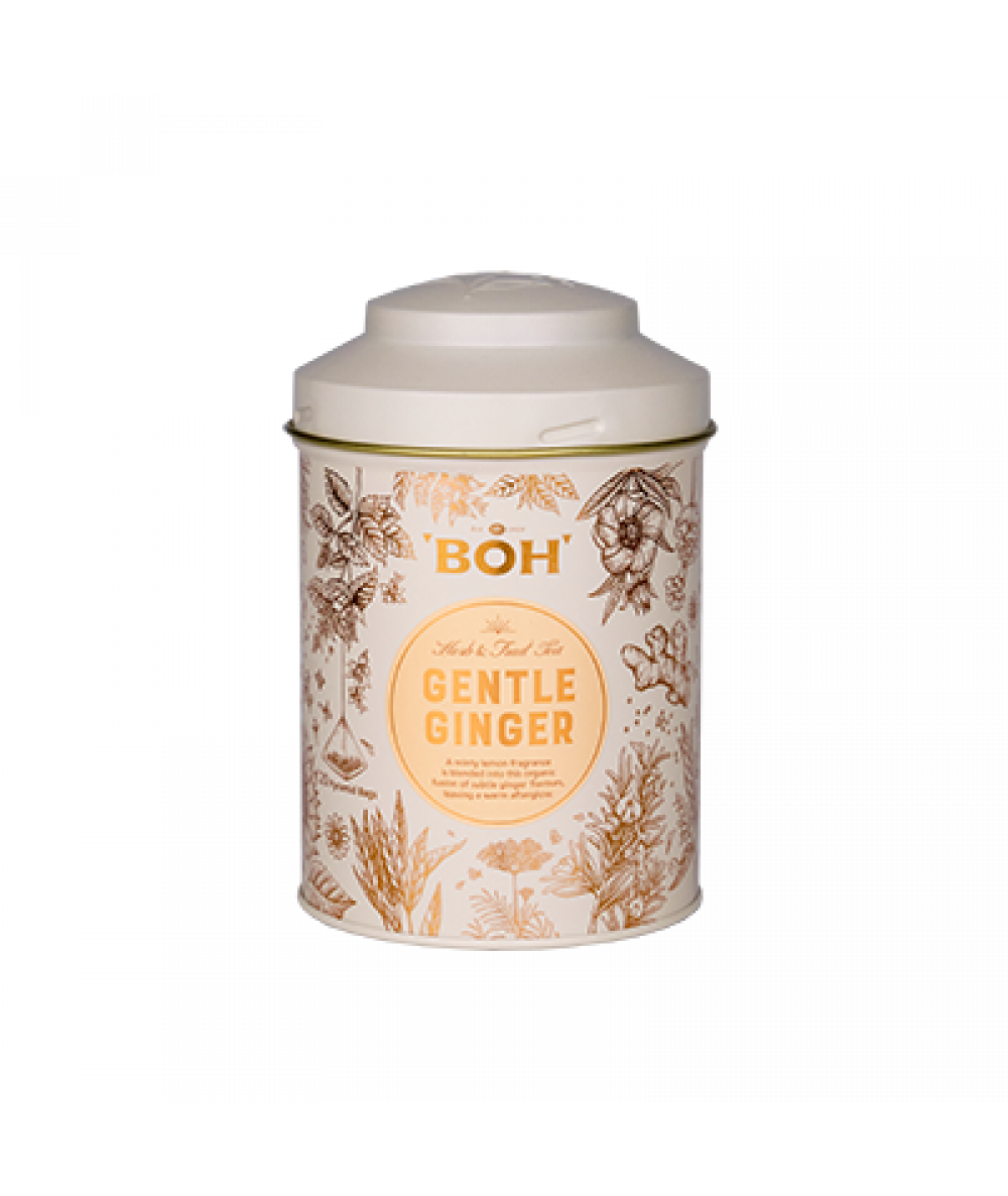 Boh Pyramid Tea - Gentle Ginger 20s
